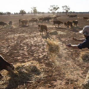 Angus Barclay in drought ravaged Warren. Picture Krystle Wright MUST CREDIT 2